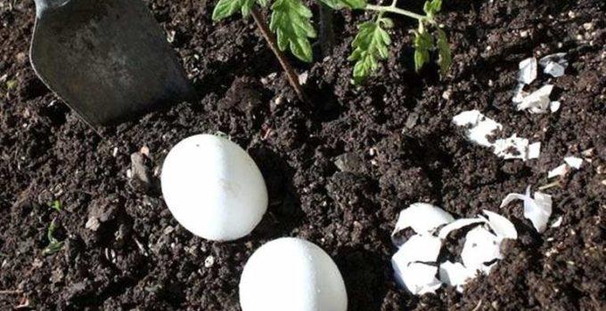yumurtayla büyü